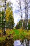 Foresta di autunno. La Russia Immagine Stock Libera da Diritti