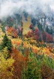 Foresta di autunno in montagne Immagini Stock