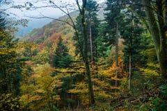Foresta di autunno in montagne dell'Alsazia Fotografia Stock Libera da Diritti