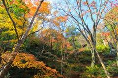 Foresta di autunno nel Giappone Fotografia Stock