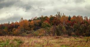 Foresta di autunno nel giorno nuvoloso Fotografia Stock