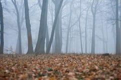 Foresta di autunno nella nebbia Fotografia Stock