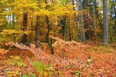 Foresta di autunno in novembre immagini stock