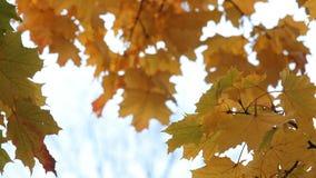 Foresta di autunno, paesaggio di autunno, autunno dorato archivi video