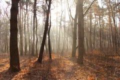 Foresta di autunno, percorso nel legno Fotografia Stock