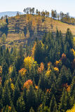 Foresta di autunno in Romania Fotografia Stock Libera da Diritti