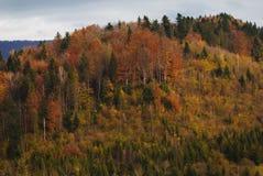 Foresta di autunno sulla montagna Immagine Stock