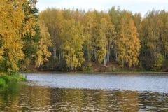 Foresta di autunno sulla sponda del fiume Fotografie Stock Libere da Diritti