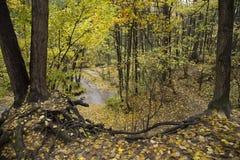 Foresta di autunno in un giorno piovoso Fotografia Stock