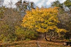 Foresta di autunno un giorno soleggiato Immagini Stock Libere da Diritti