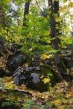 Foresta di autunno in valle del Yosemite Immagine Stock