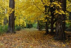 Foresta di autunno in Yosemite Fotografia Stock