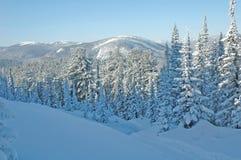 Foresta di Baikal Fotografie Stock
