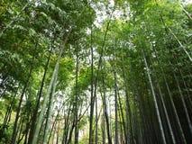 Foresta di bambù Fotografie Stock Libere da Diritti