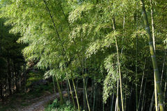Foresta di bambù Immagini Stock Libere da Diritti
