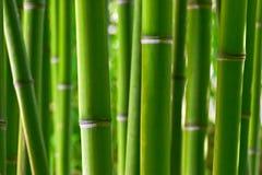 Foresta di bambù Fotografie Stock