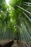 Foresta di bambù a Arashiyama Immagine Stock