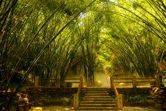Foresta di bambù asiatica Fotografia Stock