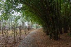 Foresta di bambù con il sentiero per pedoni che curva attraverso il parco immagini stock libere da diritti