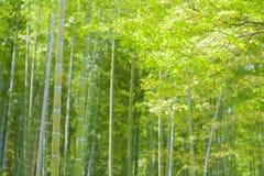 Foresta di bambù con la luce del sole Fotografie Stock Libere da Diritti