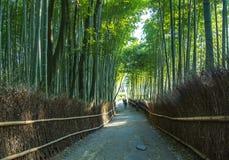 Foresta di bambù del Giappone in Arashiyama Fotografie Stock