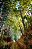 Foresta di bambù e piccolo vicolo della sporcizia, città di Sakura, Chiba, Giappone fotografie stock libere da diritti