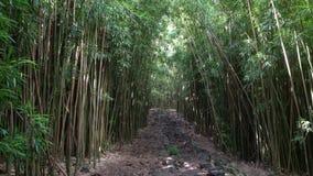 Foresta di bambù in Hawai archivi video