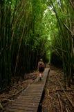 Foresta di bambù, Hawai HI fotografie stock