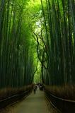 Foresta di bambù a Kyoto Fotografia Stock
