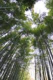 Foresta di bambù a Kyoto Giappone Fotografie Stock Libere da Diritti