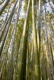 Foresta di bambù Kyoto Giappone Fotografia Stock Libera da Diritti