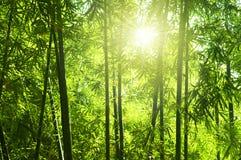 Foresta di bambù Immagine Stock