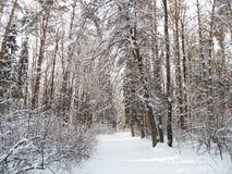Foresta di Bitsevsky Fotografia Stock Libera da Diritti