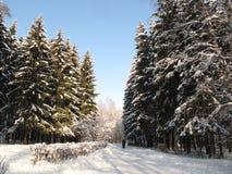 Foresta di Bitsevsky Fotografie Stock