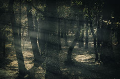 Foresta di buio di mistica Fotografia Stock Libera da Diritti
