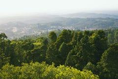 Foresta di Bussaco Fotografie Stock Libere da Diritti