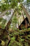 Foresta di Capilano a Vancouver nel Canada Fotografie Stock