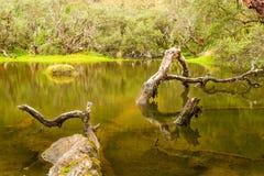 Foresta di carta antica dell'albero Immagini Stock