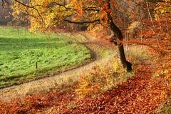 Foresta di Colorul immagine stock
