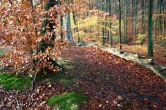 Foresta di Colorul immagini stock