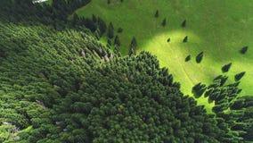 Foresta di conifere Immagine Stock Libera da Diritti