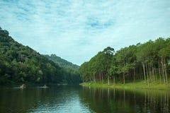 Foresta di conifere Immagini Stock Libere da Diritti
