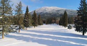 Foresta di conifere al piede della montagna 4k video d archivio