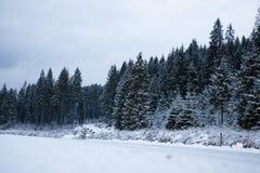 Foresta di conifere e lago della montagna con paesaggio innevato Immagine Stock
