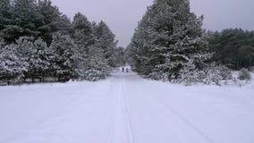 Foresta di conifere favoloso bella di inverno video d archivio