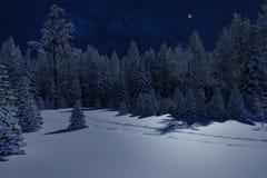 Foresta di conifere gelida di inverno nella neve fotografie stock