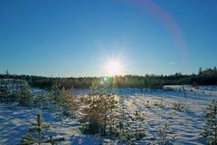 Foresta di conifere di inverno nel giorno soleggiato Immagini Stock
