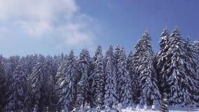 Foresta di conifere di inverno in tempo soleggiato Siluetta dell'uomo Cowering di affari stock footage