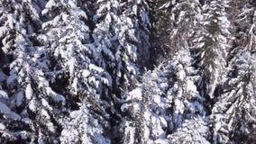 Foresta di conifere di inverno Vista da sopra Siluetta dell'uomo Cowering di affari archivi video