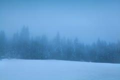 Foresta di conifere in nebbia densa di inverno Immagine Stock Libera da Diritti